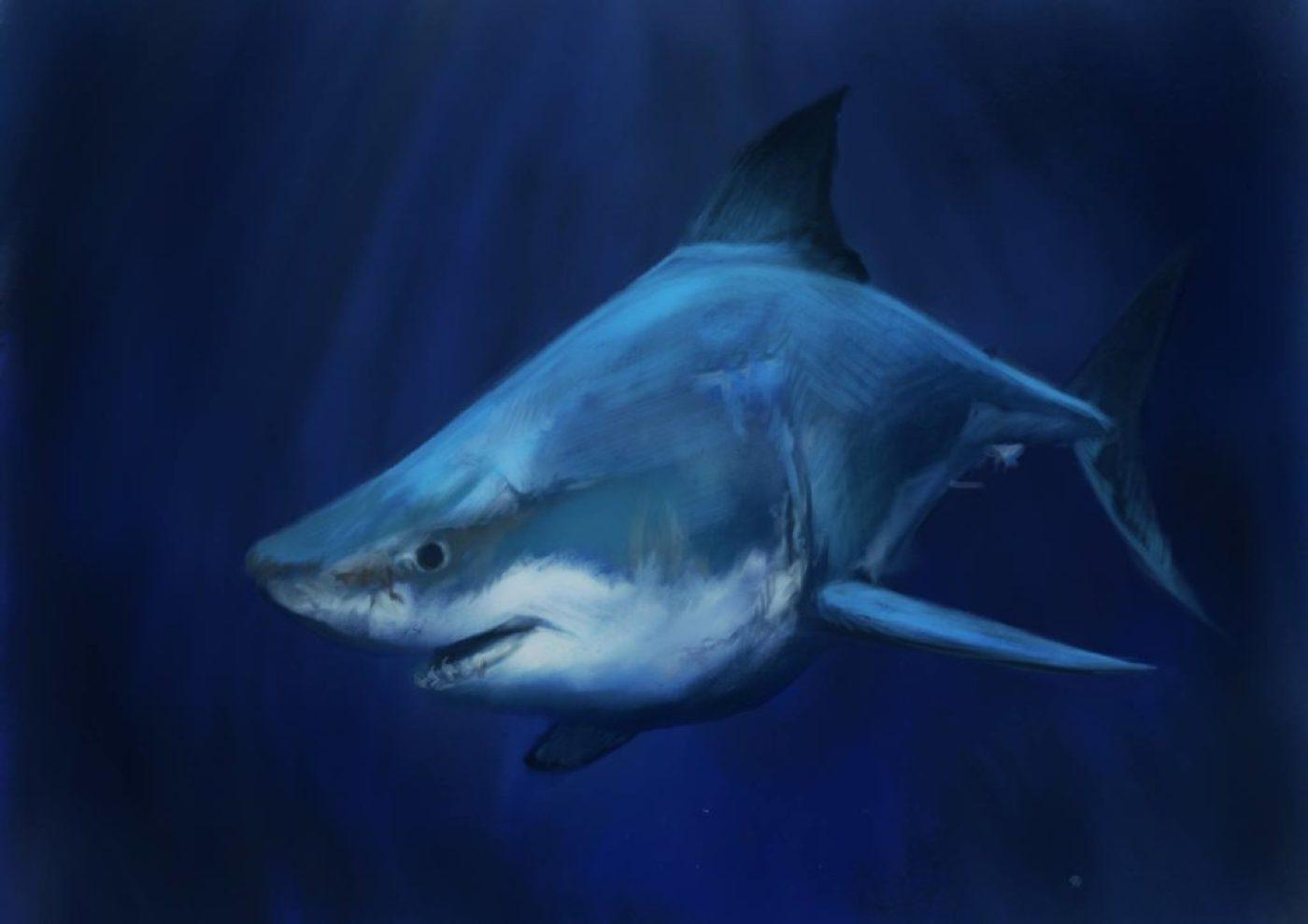 12-requin-ipad