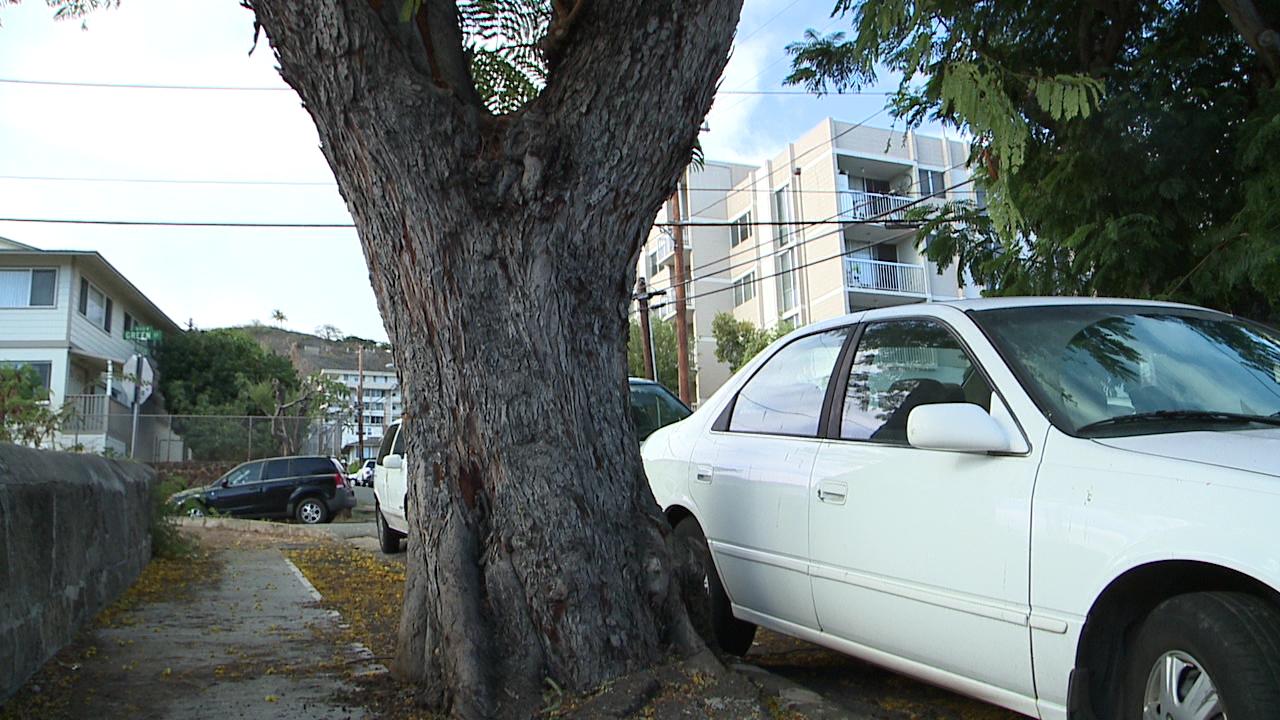 7-16 emerson tree_105638