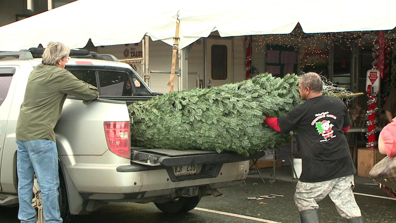 christmas tree shopping_131016