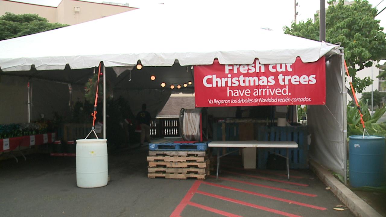 christmas trees walmart_130266