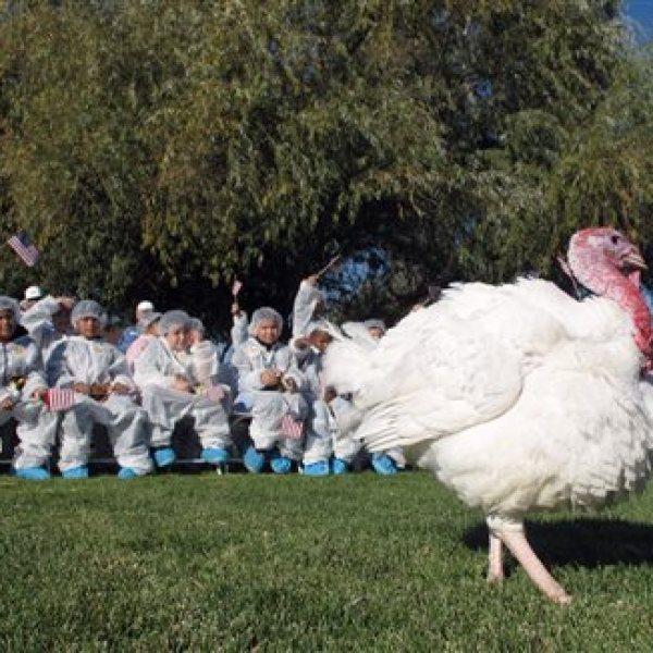 Presidential Pardon Thanksgiving Turkey_130781