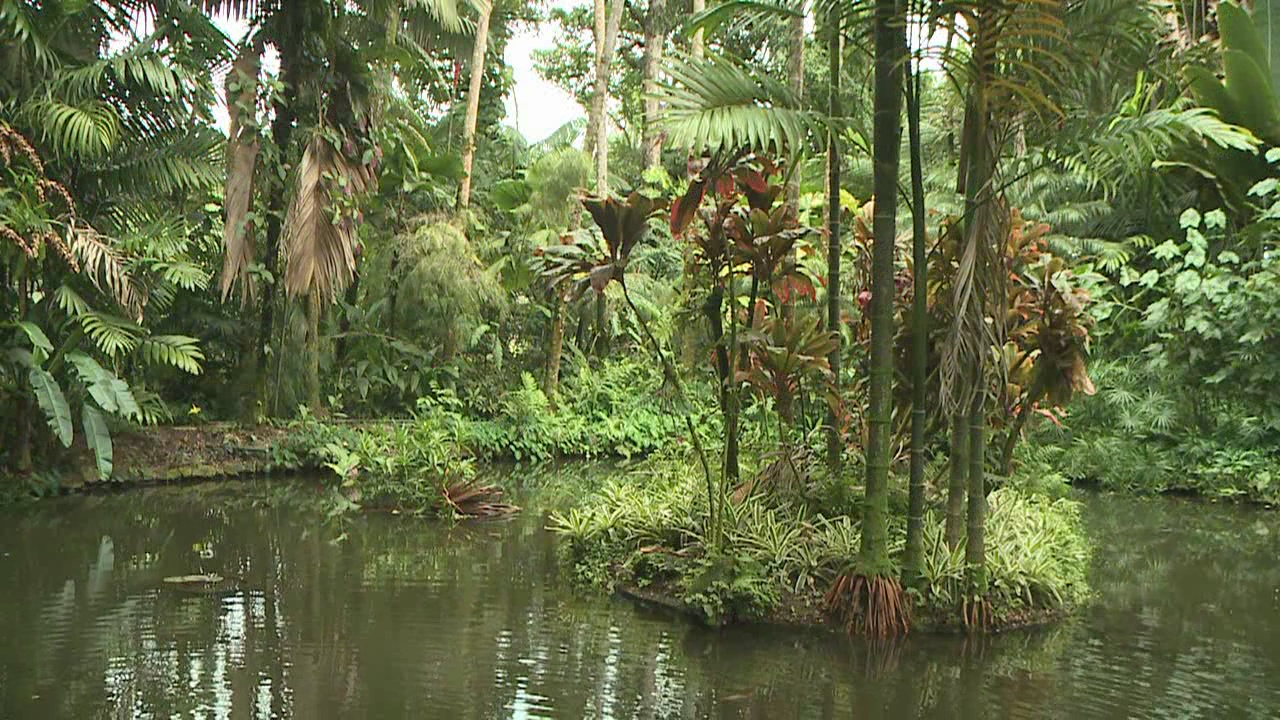Hawaii Tropical Botanical Garden_126676