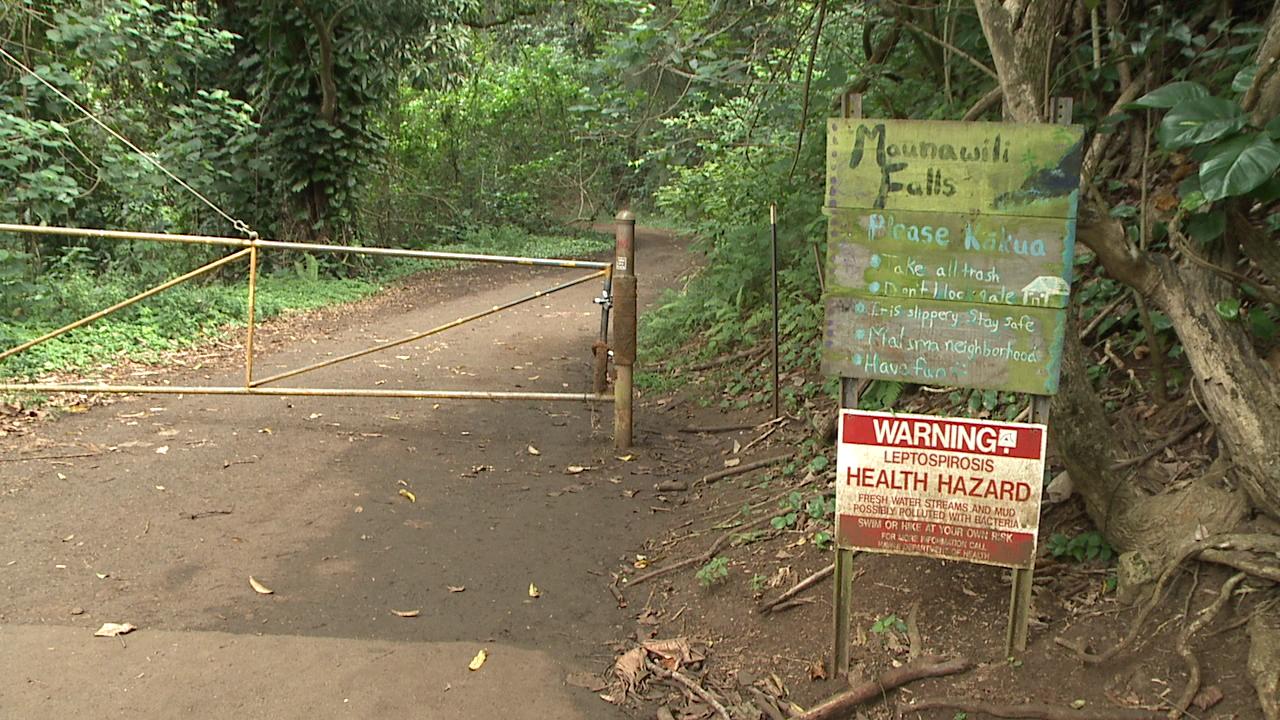 maunawili falls trail_144639