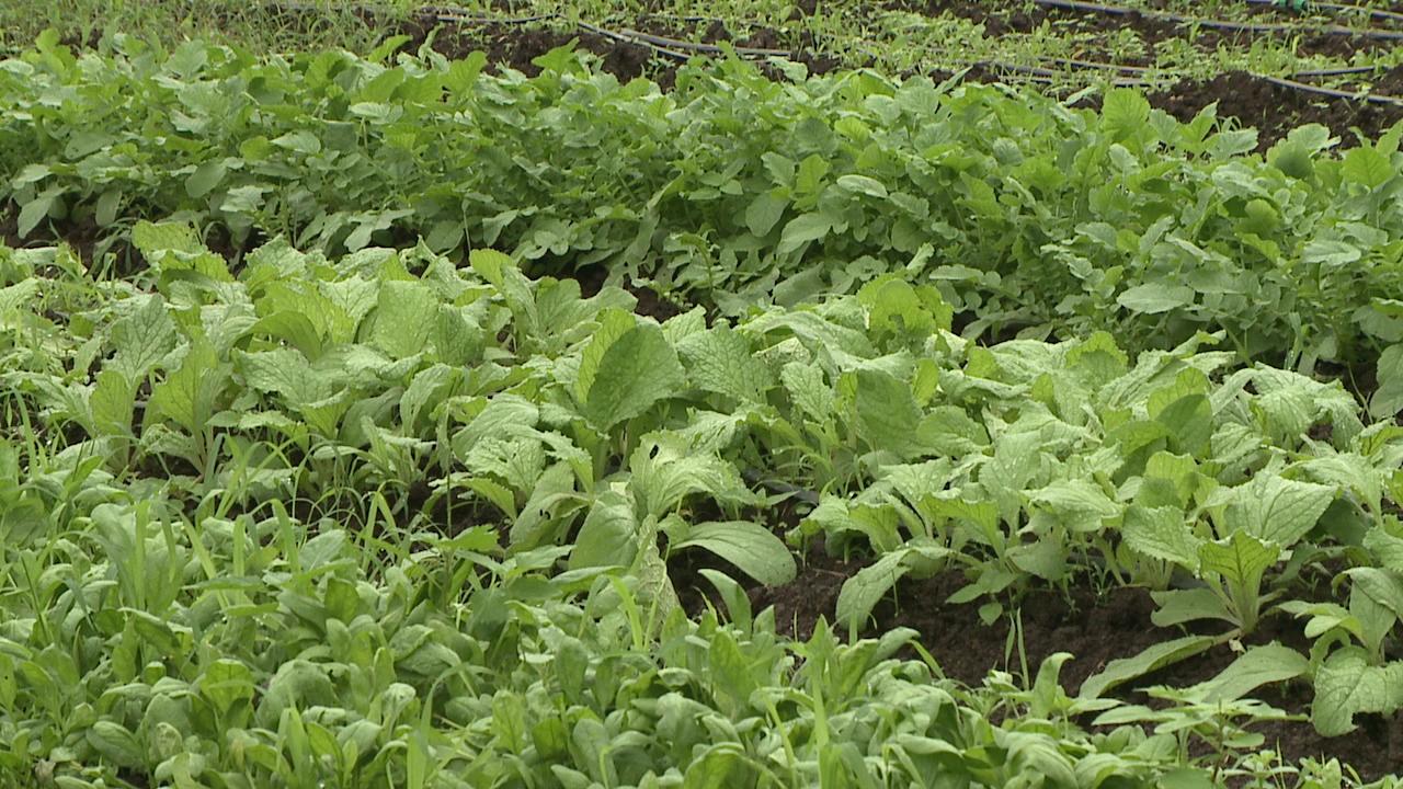 farm generic (1)_131553