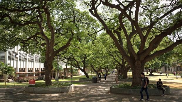 UH-manoa-mall-tree_146656