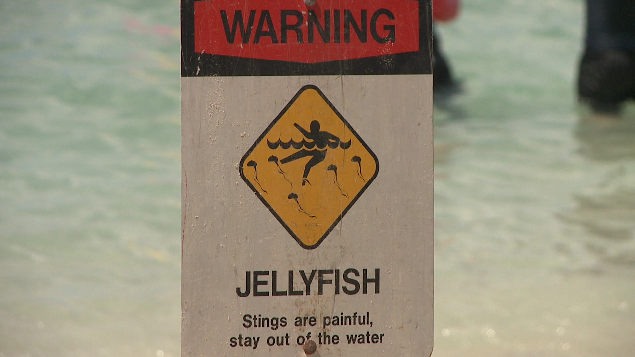 jellyfish warning sign waikiki_159722