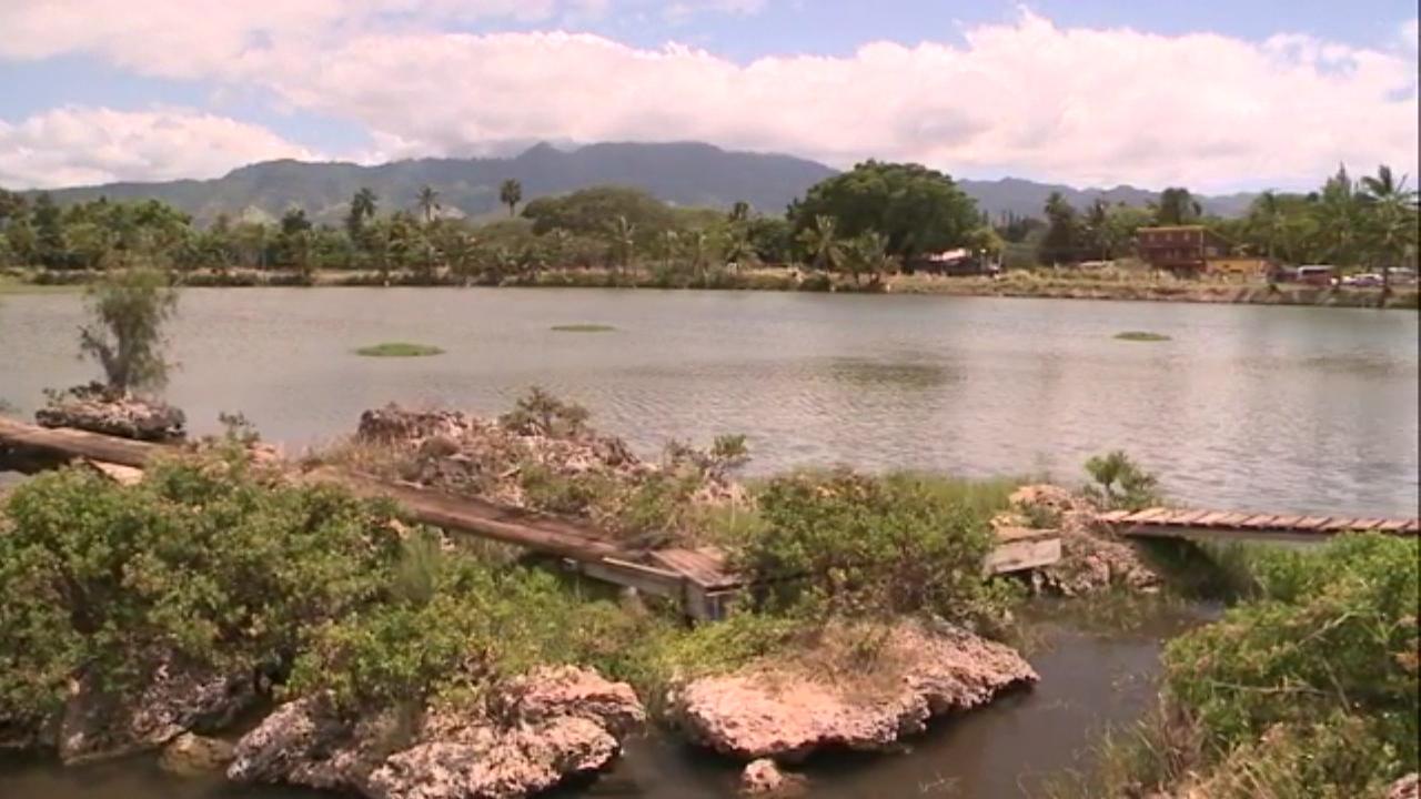 kamehameha schools haleiwa fish pond (1)_160366