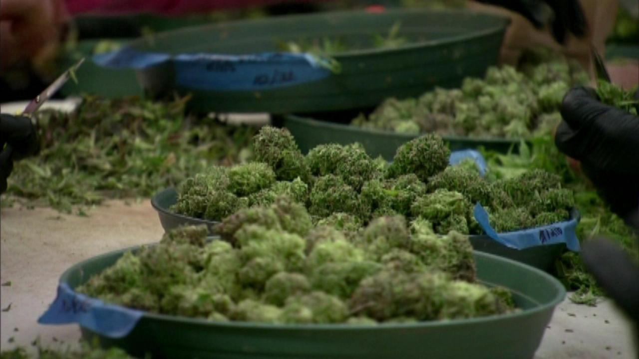medical marijuana_143709