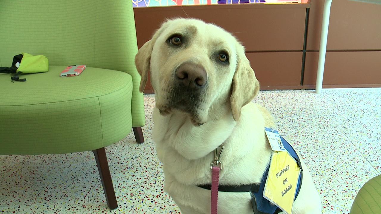winnie therapy dog_210041