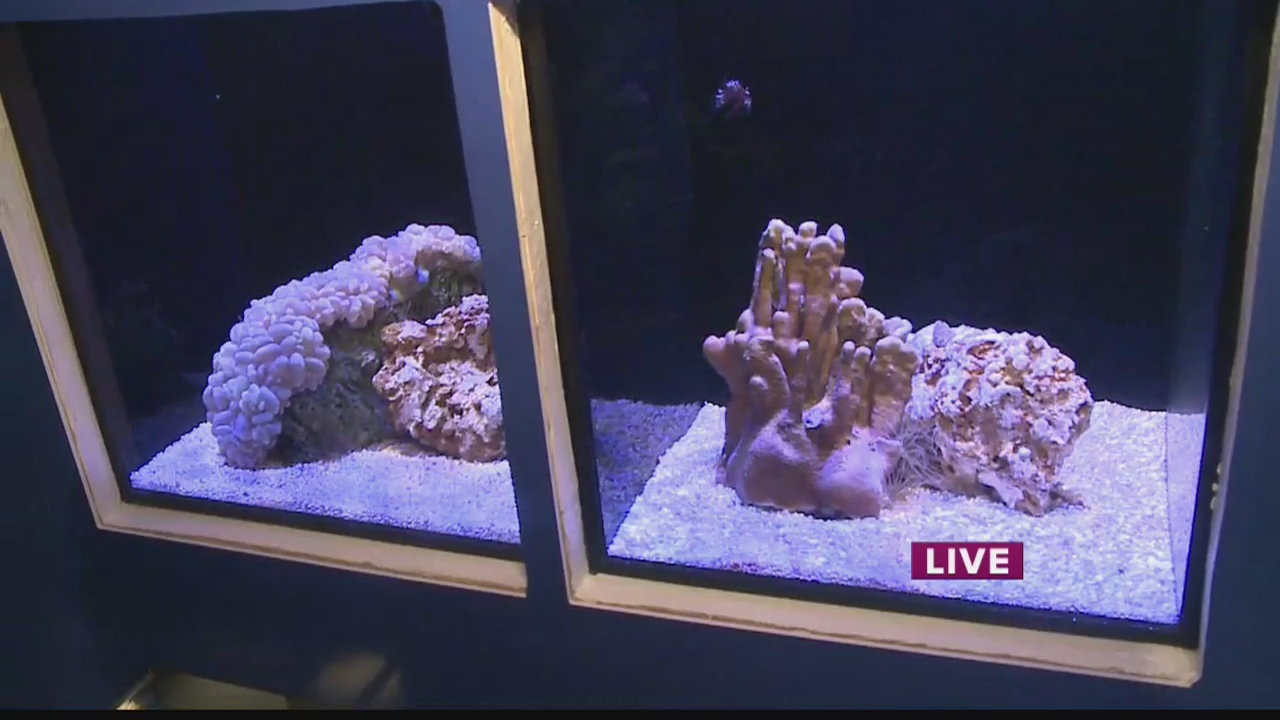 The Living Reef at the Waikiki Aquarium