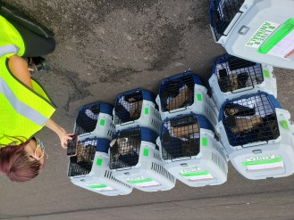 Animal Rescue flight