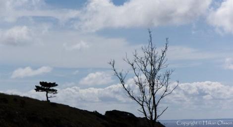Bonsai at Kullaberg