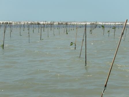 Cuaca buruk buat nelayan rugi miliaran rupiah