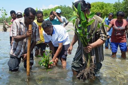 Tutupan Mangrove Pulau Lembata Berkurang 40 Persen