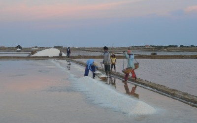 Government Should Withdraw Salt Import Policy : Kiara