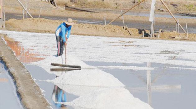 Kiara Ingin Mendag Audit Garam di Kementeriannya