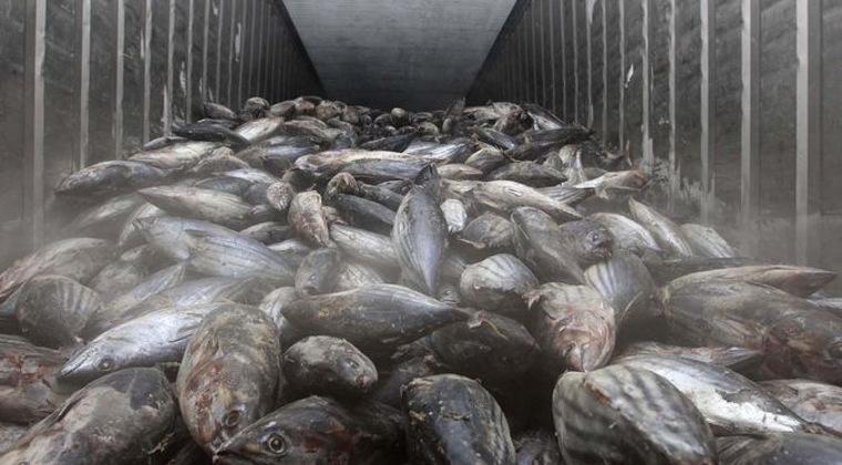 Alih Muatan di Laut Indikator Kuat Pencurian Ikan