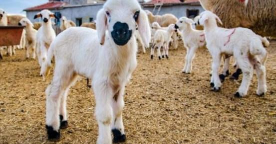 Ξεκίνησε η περίοδος ένστασης στις λίστες κρεμαστρών για το «πρόγραμμα εκλαΐκευσης μικρών βοοειδών».