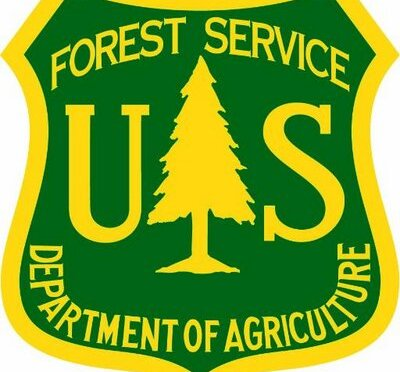 Forest begins Thinning Projects