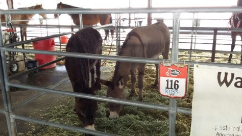 """the """"hardest working burros"""" in the business. Waylon and Willie"""