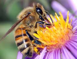 Inyo Mono Ag Commissioner warns of Bee Swarms