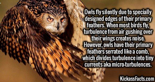 1939 Owl Wings