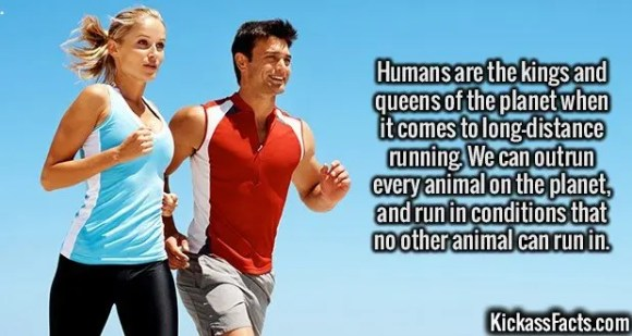 2537 Running-Humans are the kings and queens of the planet when it comes to long-distance running. We can outrun every animal on the planet, and run in conditions that no other animal can run in.