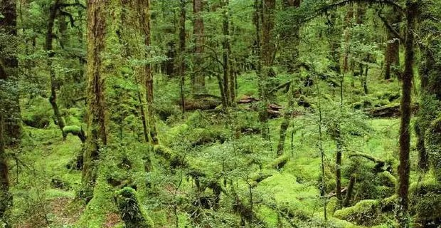 forest_management_in_japan