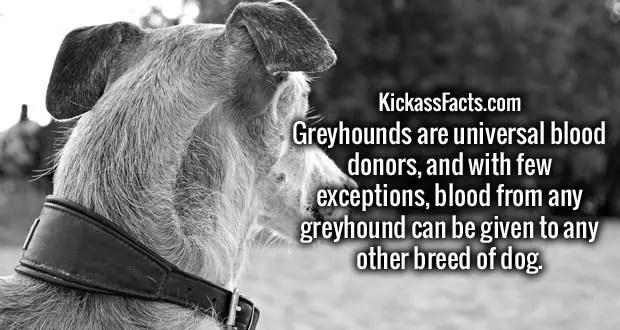greyhound.jpg?w=620