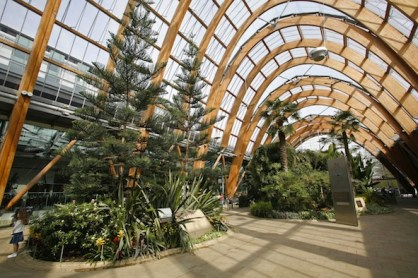 trees in a glass dome