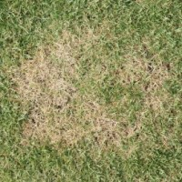 Help With Lawn Disease In Mississauga - Kick Gas Lawn Care