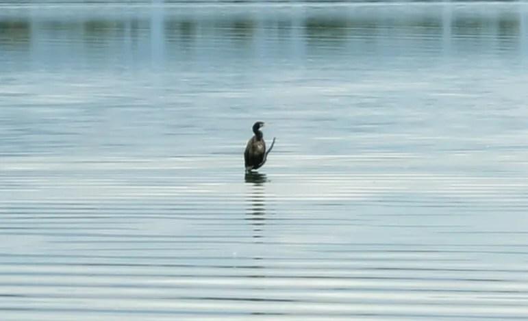 Lake Kerkini, Serres, Greece | Kicking Back the Pebbles