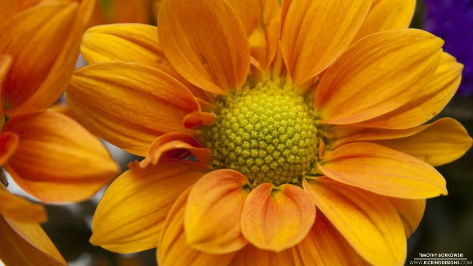 flower-11-21-2013
