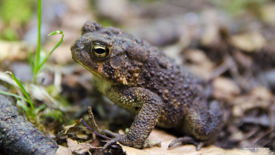 toad-9-27-2015