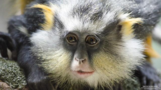 monkey-2-8-2015