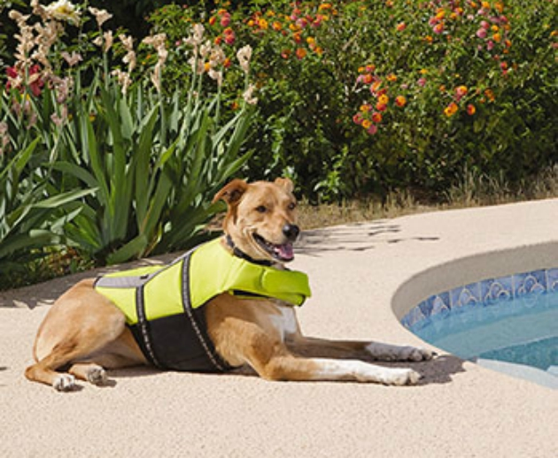 Cooling Off Your Pets