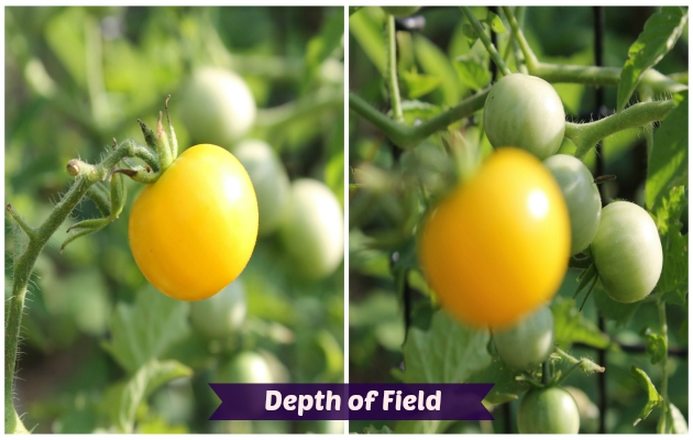 Photography Tips For Beginners depth of field