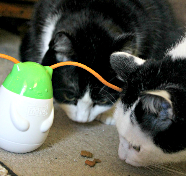 4 Ways To Keep Your Indoor Cat Active And Happy #SeasonsTreatings girls