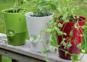 6 Brilliant Hacks For Starting An Herb Garden