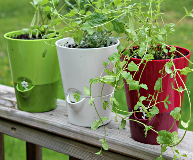 Hacks For Starting An Herb Garden planters