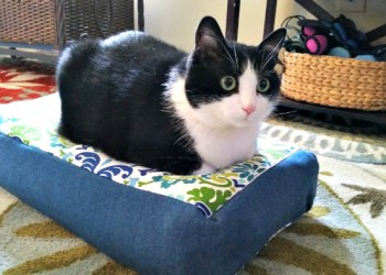 How To Sew Your Own Easy To Make DIY Cat Bed hazel