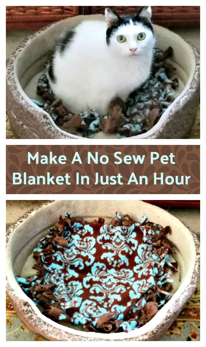 I love fall's cool weather, don't you? I love to warm up with a soft blanket. So do my cats! If you have a furry friend, here is how to make a no sew pet blanket in an hour #ad #MuseCleanPlate @purina