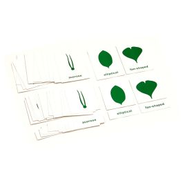 Nomenclature Cards for Botany Cabinet