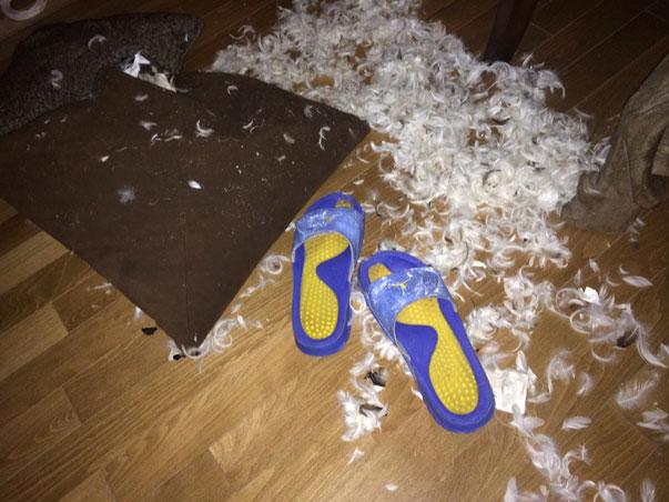 Curtis-destroyed-Big-Als-couch