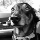 bark-week-header-thursday-dogs-of-kiddnation-130x130