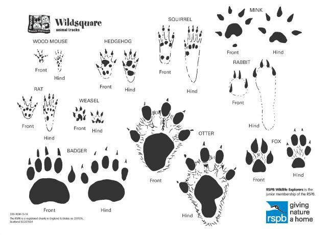 Animal Tracks: How to get your kids to recognise them with