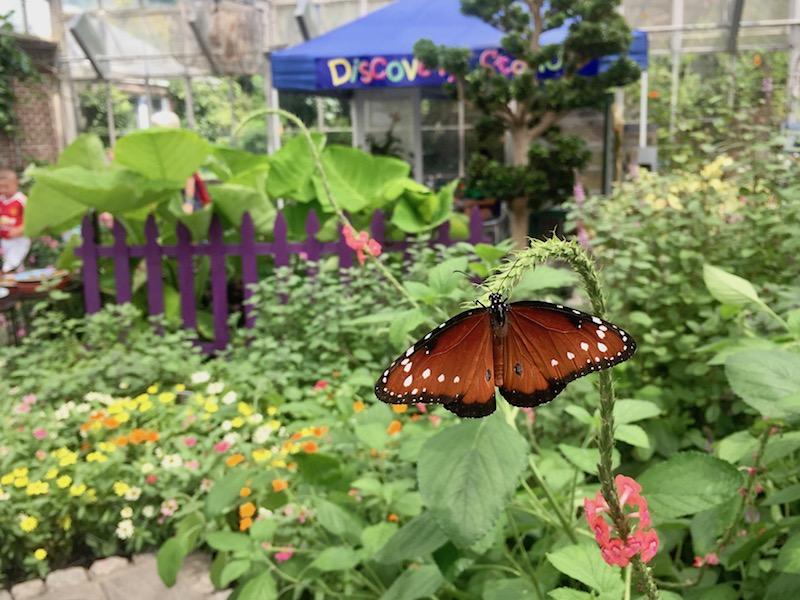 Brookside Gardens | KidFriendly DC