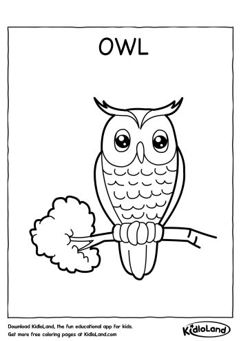 Download Free Owl Coloring Page and educational activity