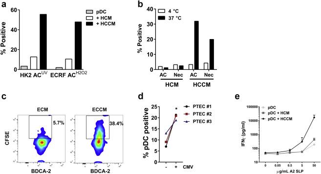 Human plasmacytoid dendritic cells acquire phagocytic