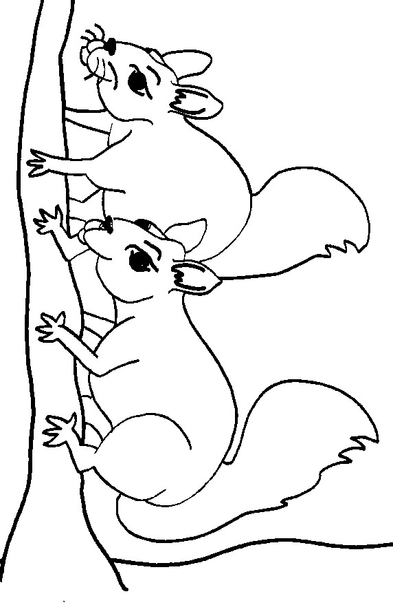 kidsnfun  13 coloring pages of squirrel
